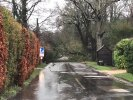 Tree fallen across Cowfold lane..SEE advised as tree is across a power line. Tree will need clearing after SEE have address power issue
